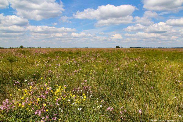 Vogelschutzgebiet Havelland
