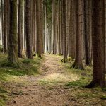 Bedrohung | Forstwirtschaft