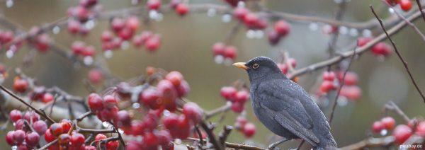 Nahrungsquelle für Vögel & Co