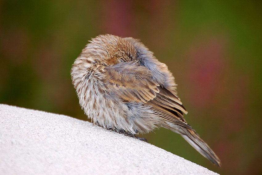 Lassen wir ihn schlafen | Quelle: Flickr / Autor Larry Lamsa / CC 2.0 Lizenz unverändert