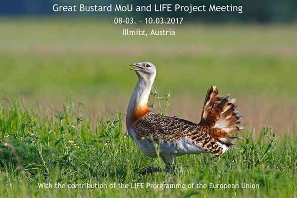 Great Bustard Memorandum of Understanding and LIFE Project Meeting in Illmitz | Quelle: www.grosstrappe.at