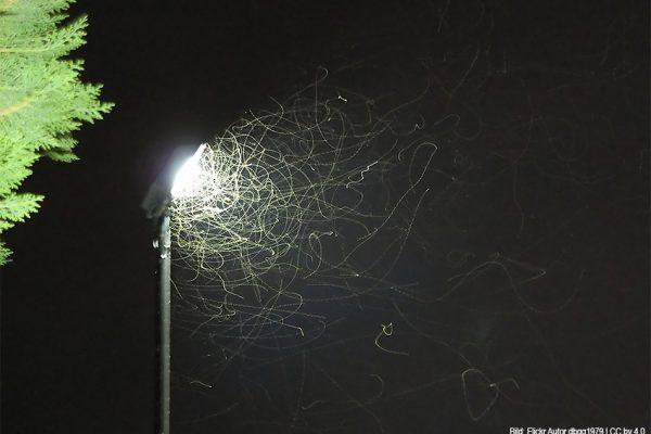 Nachtaktive Insekten an Straßenlaterne | Quelle: Flickr -Autor dbgg1979 / CC by 4.0 - Bild beschnitten