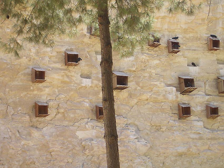 Waldrappkolonie in Birecik /Türkei | Bild: Wikipedia Autor Nightstallion03