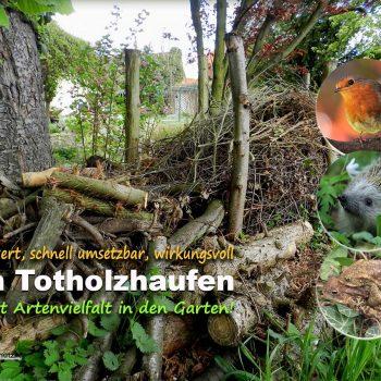 Ein Totholzhaufen bringt Leben in den Garten | LigaVogelschutz