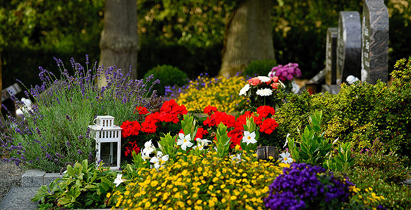 Vielfältig und artenreich bepflanzte Gräber sehen nicht nur toll aus. Sie bieten Insekten auch eine Fülle an Nahrung.